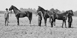 Grant's horses (left to right): Egypt, Cincinnati, and Jeff Davis, Cold Harbor, VA, 1864