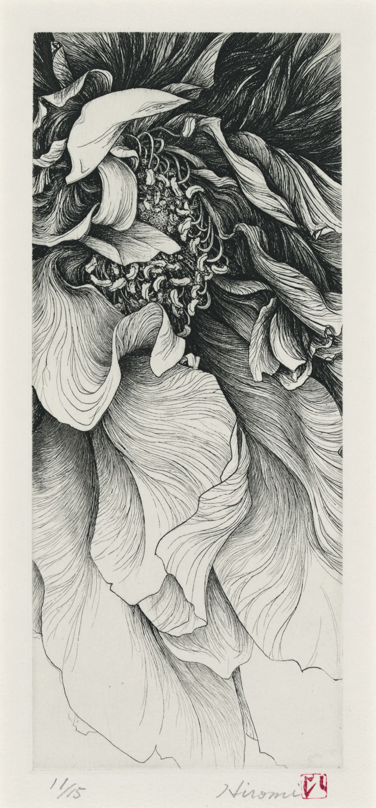 Ink Line Drawing Artists : A flower on the cutting edge exhibition library of
