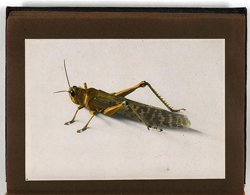 The Locust Plague of 1915 Photograph Album - American Colony in Jerusalem, 1870-2006 - Digital Collections