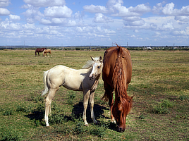 Free to Use and Reuse: Horses