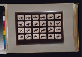 Horses. Leaping a 3 ft. 6 hurdle. Photo by Eadweard Muybridge, 1881