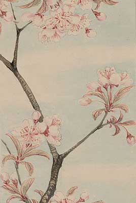 Branch with leaves and cherry blossoms