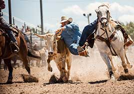 Tough takedown in the Frontier Days rodeo arena, Cheyenne, Wyoming